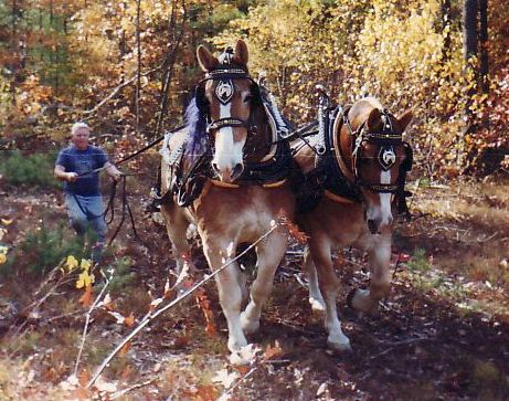 Logging with horses